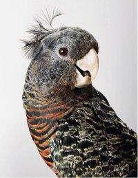 Клички для самцов попугаев