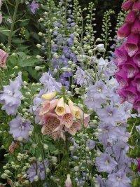 Заботы цветоводов в мае