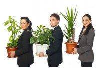 Какие выбрать растения для офиса?