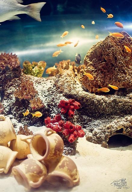 Польза аквариума