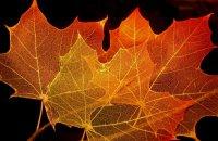 Склетирование листьев в домашних условиях