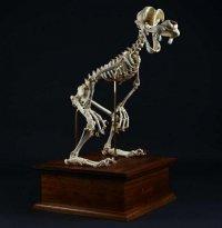 Скелеты мультяшек от Ли Хьюн Ко