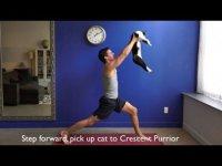 Как заниматься йогой с котом