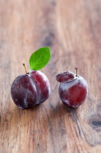 Вредители слив: сливовая опыленная тля