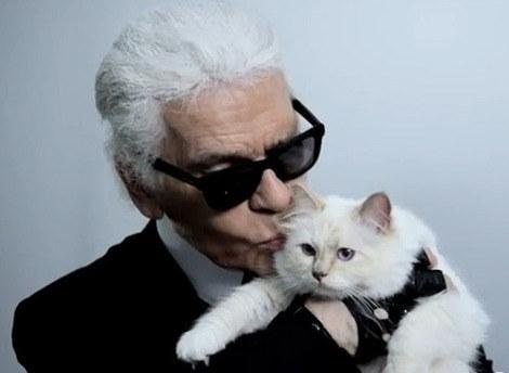 Карл Лагерфельд хочет жениться... на своей кошке