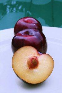 Болезни сливы: дырчатая пятнистость листьев (клястероспориоз)