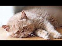 Дневник грустного кота