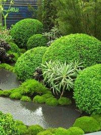 Фигурная стрижка растений