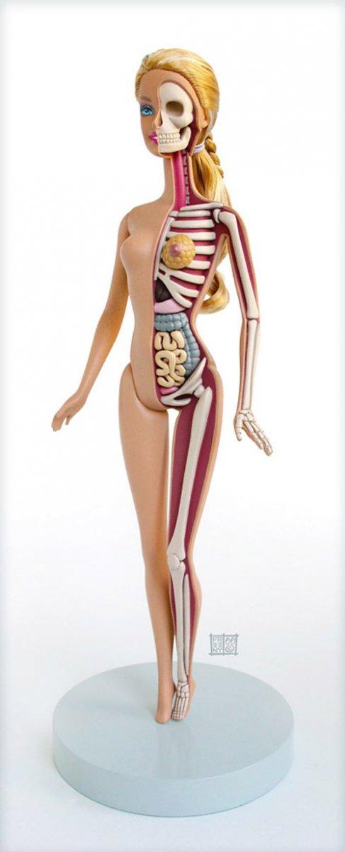 Барби в разрезе