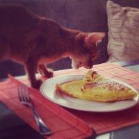 Почему коты настоящие дармоеды?