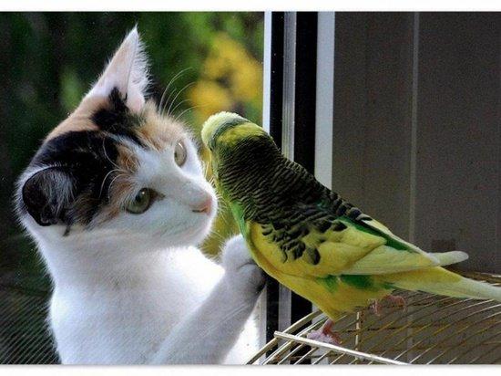 Домашний зоопарк: птичку жалко...