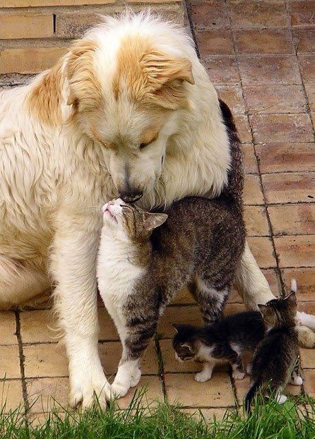 Домашний зоопарк: как кошка с собакой