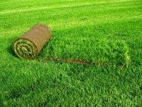 Рулонный газон: выбор и размещение