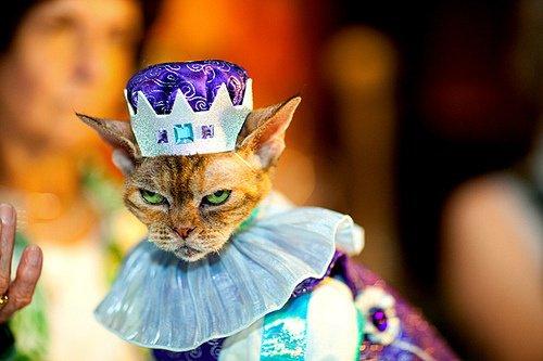 Самые влиятельные коты в истории мира