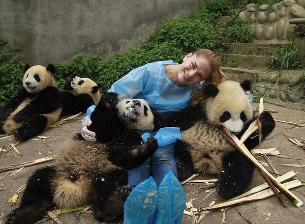 Заповедник панд Bifengxia