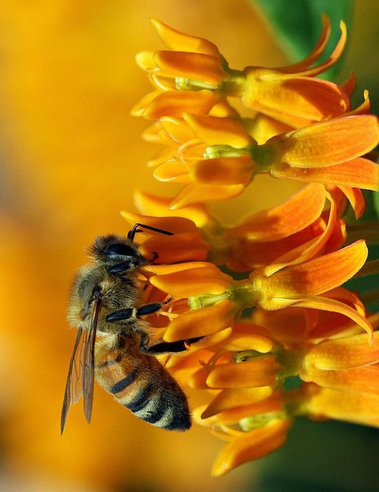 Что делать при укусе пчелы или осы