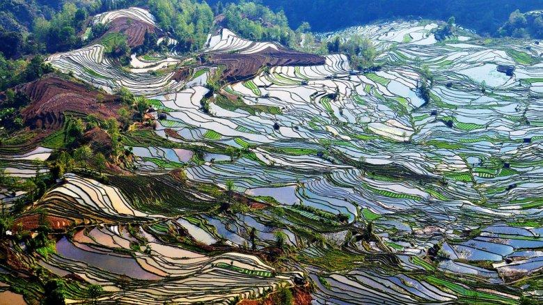 Рисовый рай