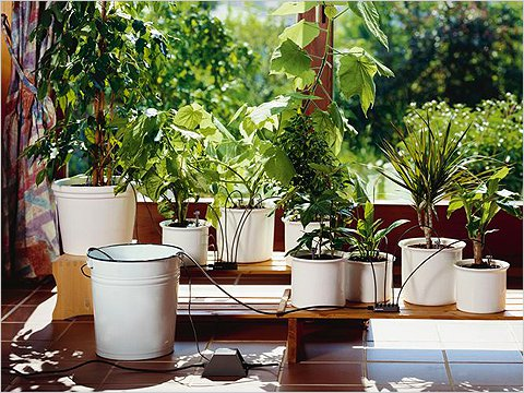 Как полить растения во время отпуска