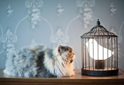 Птичка в клетке: оригинальный ночник