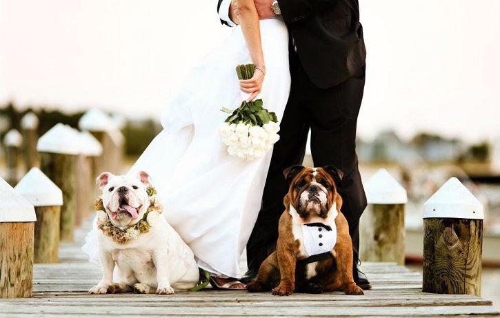 Питомцы в качестве гостей на свадьбе