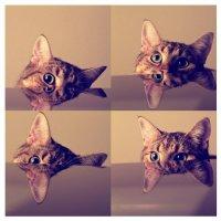 Обучение кошки: реально ли?