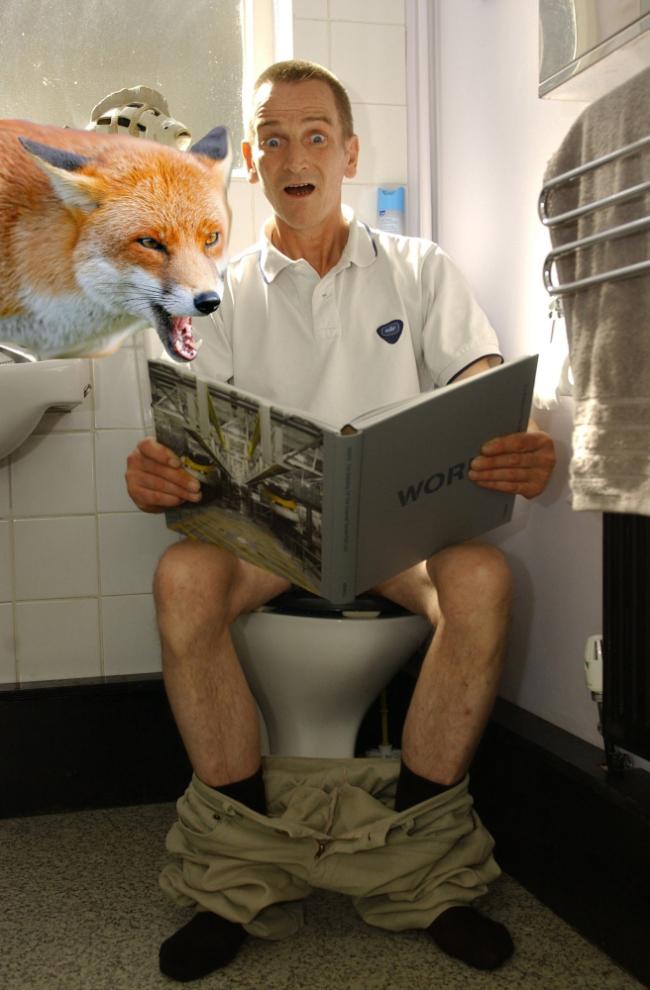Бойтесь лисиц в туалетах: реальная история из жизни