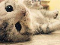 Какие прививки нужны котенку