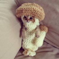 Новая звезда интернета - котенок в костюме грибочка