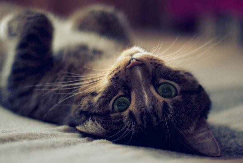 Укрощение строптивых: кошки на руках