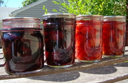 Консервация вишни: рецепты на зиму