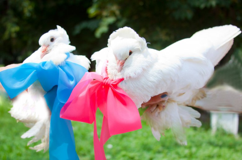 Идея для свадьбы: голуби