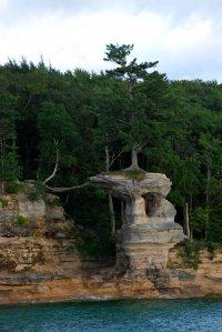 Дерево на Часовой скале