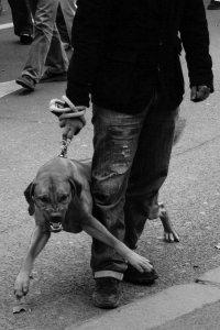 Как заставить соседей выгуливать собаку в наморднике