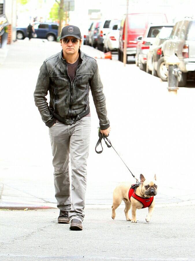 Джереми Реннер потерял собаку