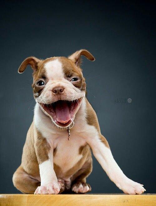 Собаки тоже умеют смеяться