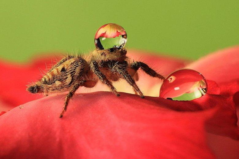 Умилительный паук в шапочке из воды