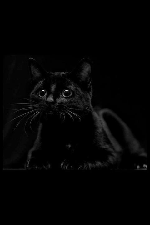 Черное очарование