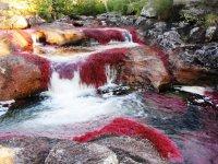 Цветная река Каньо-Кристалес