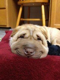 Разгаданы тайны собачьей мимики