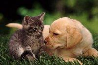 Кошка или собака: кого выбрать?