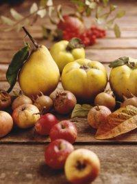 Как снимать урожай яблок и груш