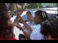 В США верующие поклоняются дереву и считают фекалии насекомых слезами Бога