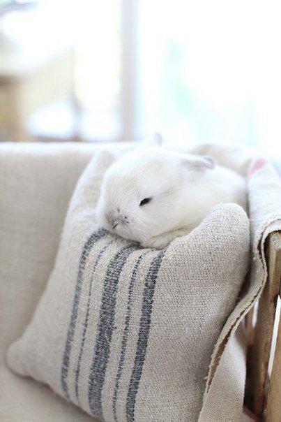 Кролик спит