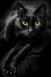 Характер кошки и ее окрас: черная кошка