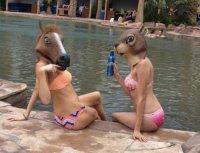 Да, у них были лошади...