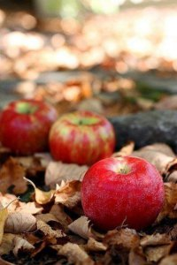 Можно ли кормящим яблоки?