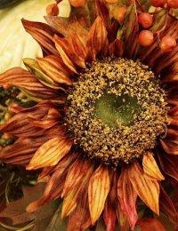 Какие цветы сажают осенью?