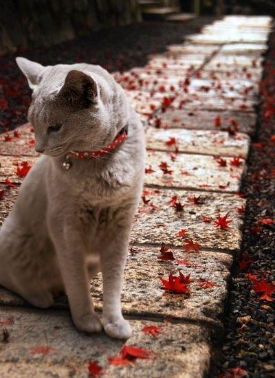 Характер кошки и ее окрас: серая кошка