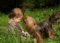 Какое животное подарить ребенку?