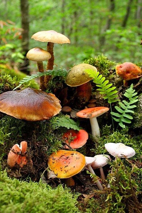 Народные способы проверить грибы на съедобность